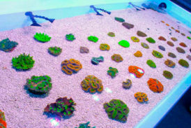 All Coral